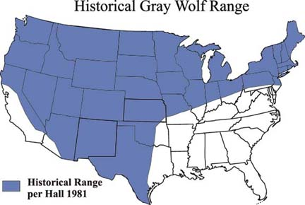 Wolves Update Great Come Back Kids Holt Science - Maps of the location of wolves in the us